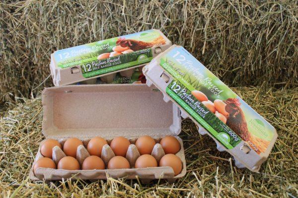 Jessandra Eggs